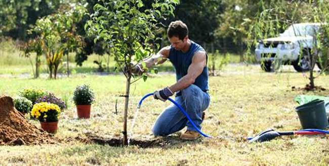 How Experts Play An Essential Role In Tree Maintenance?